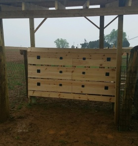Our 18 nesting boxes ready for the Collect-Your-Own-Eggs experience!